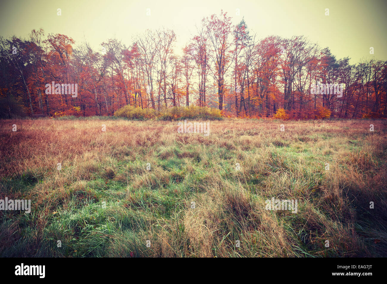 Vintage filtered photo of an autumn field. - Stock Image