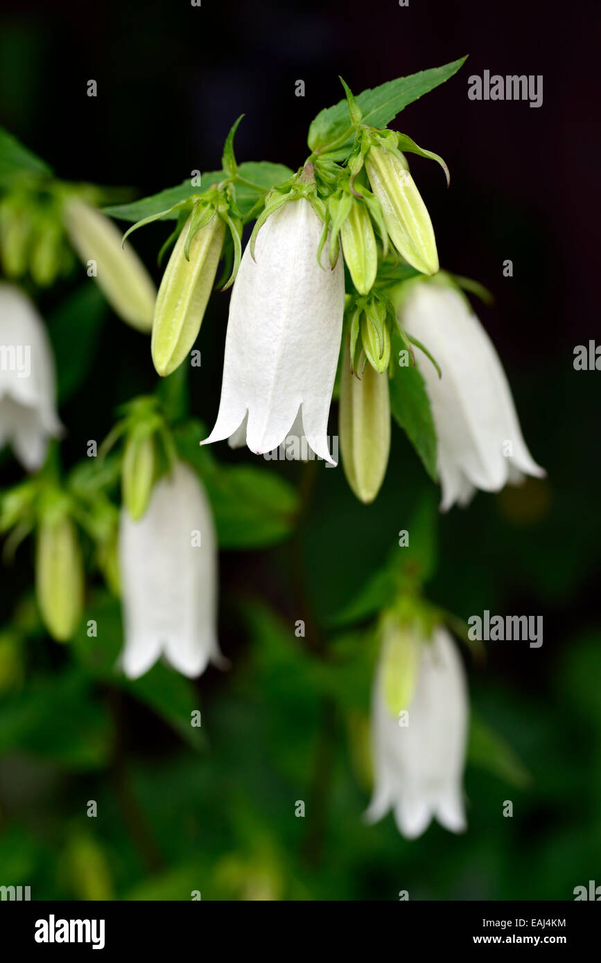 White Bell Shaped Flowers Stalk Images - Flower Decoration Ideas