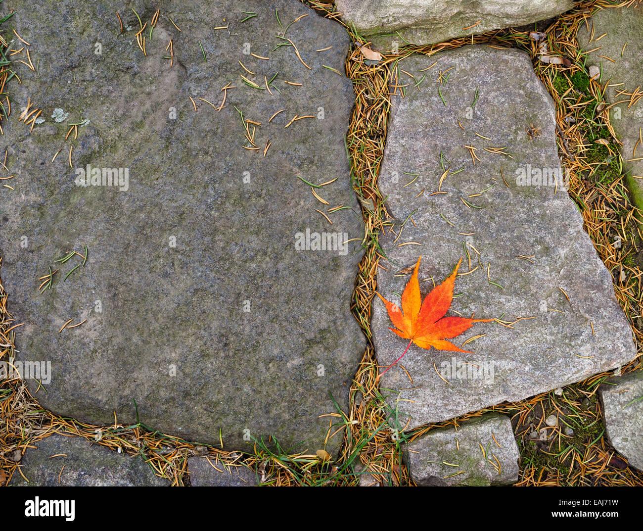 a-single-leaf-gold-red-orange-fall-japanese-maple-leaf-fallen-on-a-EAJ71W.jpg