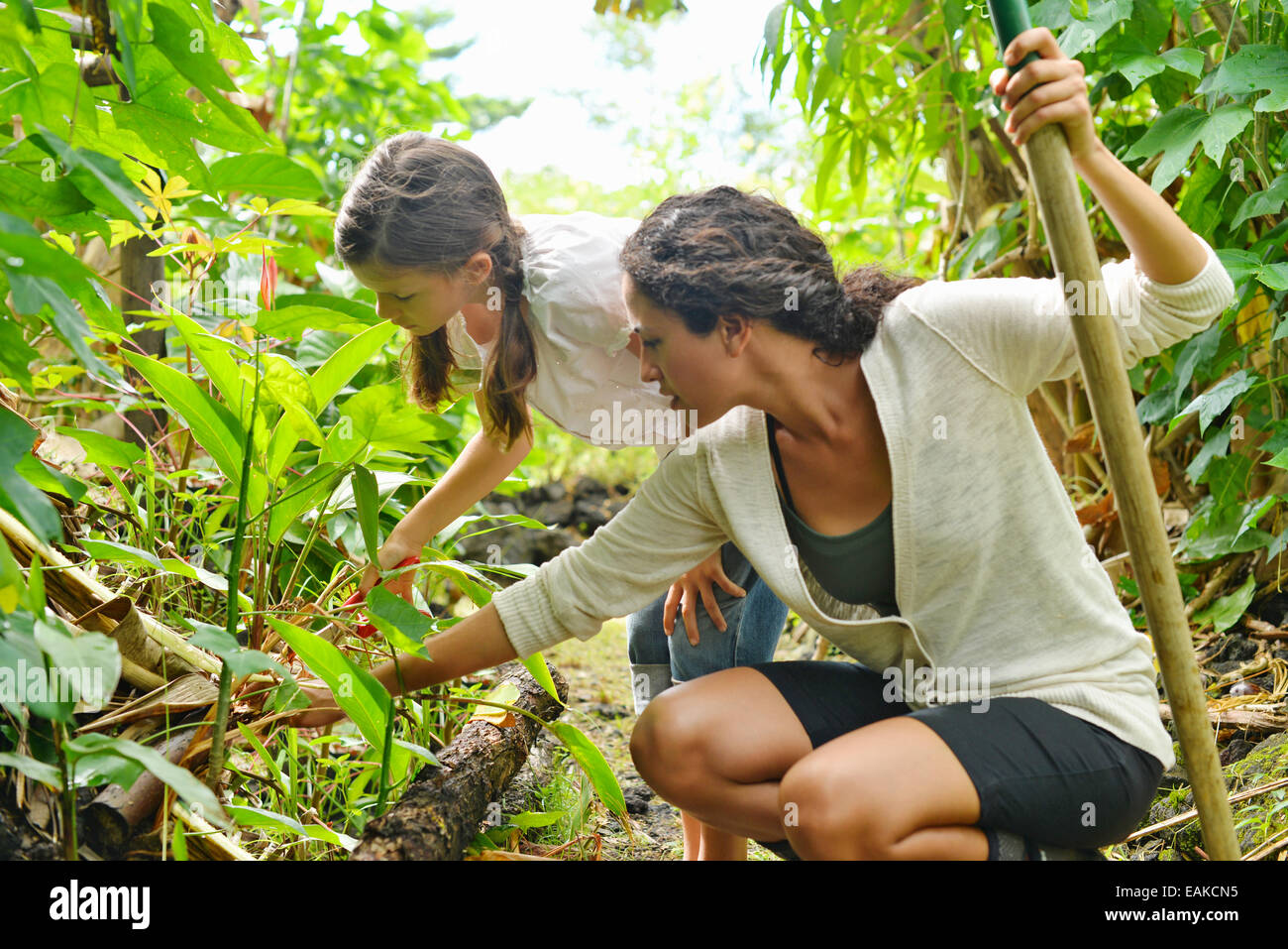 Woman and girl inspecting plants in garden - Stock Image