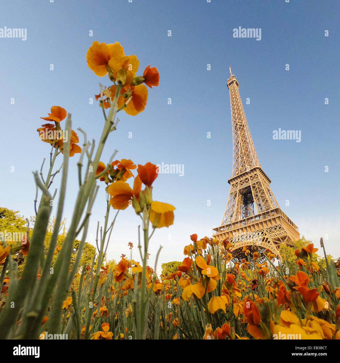 Eiffel Tower seen through flowers, paris, France - Stock Image