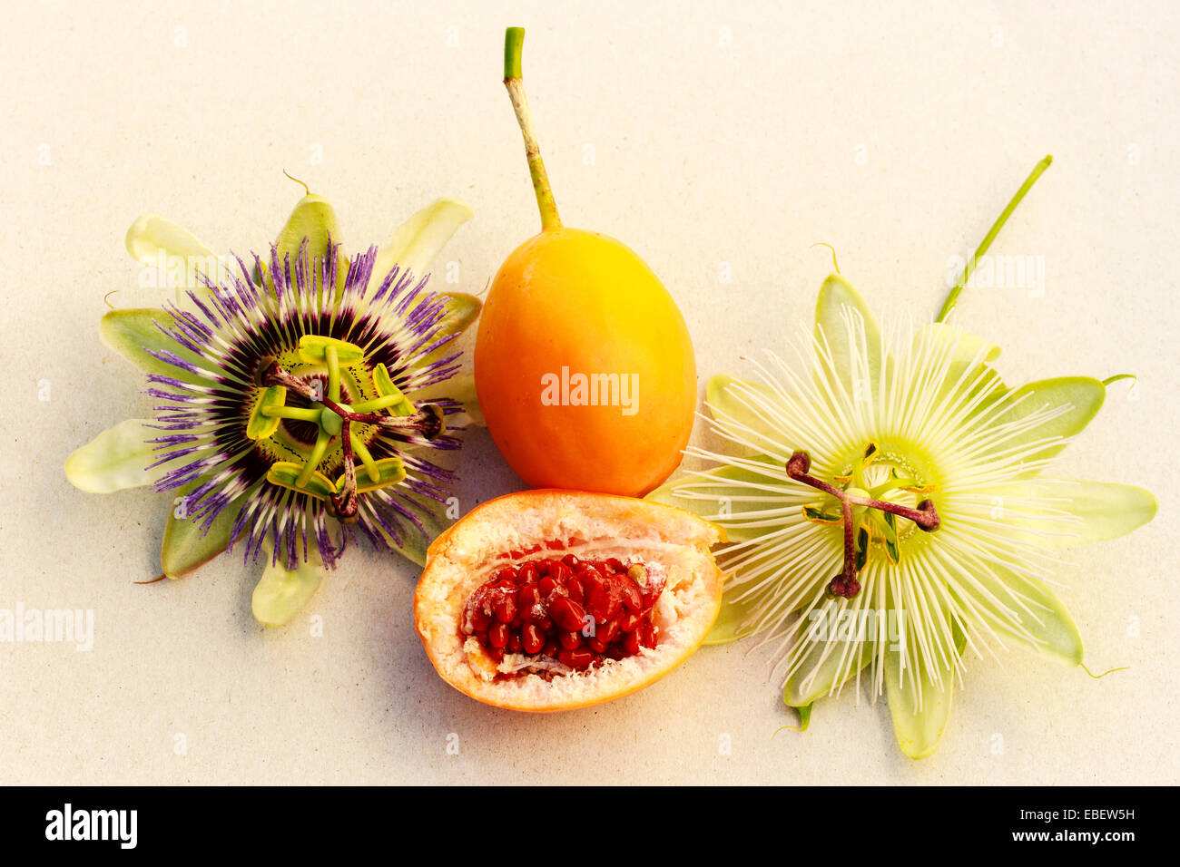 passiflora-caerulea-l-and-pc-constance-elliot-r-flowers-with-whole-EBEW5H.jpg