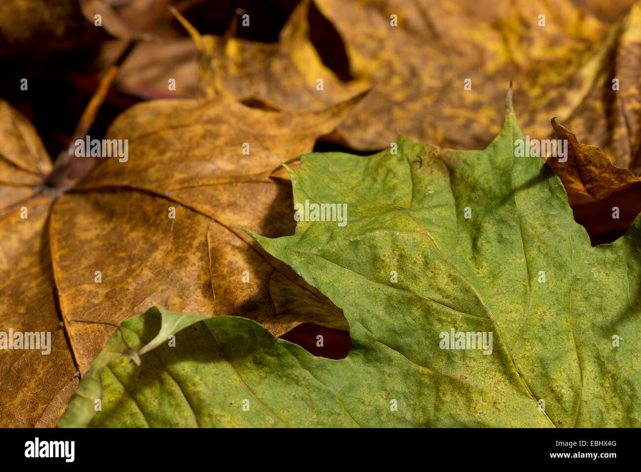 rich bright brilliant changing colors of autumn the fall seen in ...