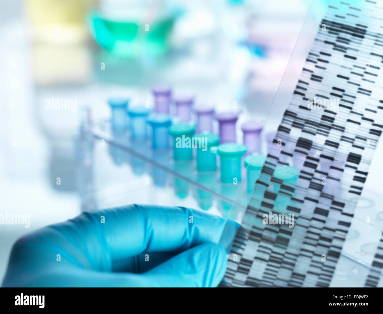 Scientist holding DNA gel in front of samples for testing in laboratory - Stock Image