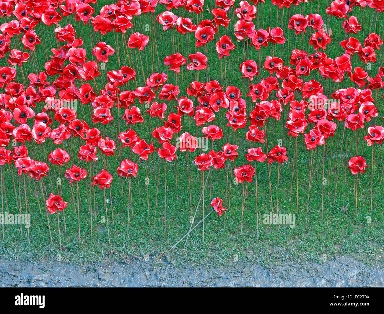 Tower,of,Greater,London,England,UK,installation,art,moat,between,July,and,November,2014,commemorating,the,centenary,of,the,outbreak,of,World,War,I,one,ceramic,poppies,888,246,British,or,Colonial,serviceman,killed,in,the,War,Paul,Cummings,Cummins,Tom,Piper,attraction,2014,tourist,tourism,red,flower,Gotonysmith,first,line,of,a,poem,by,an,unknown,World,War,I,soldier,pool,of,blood,which,appeared,to,be,pouring,out,of,a,bastion,window,(the,Buy,Pictures,of,Buy Images Of,Weeping,Window,remembrance,respect,ex-serviceman,ex-servicemen,flowers,summer,autumn,sun,sky,blue,bluesky,detail,of,mud,grass,,,