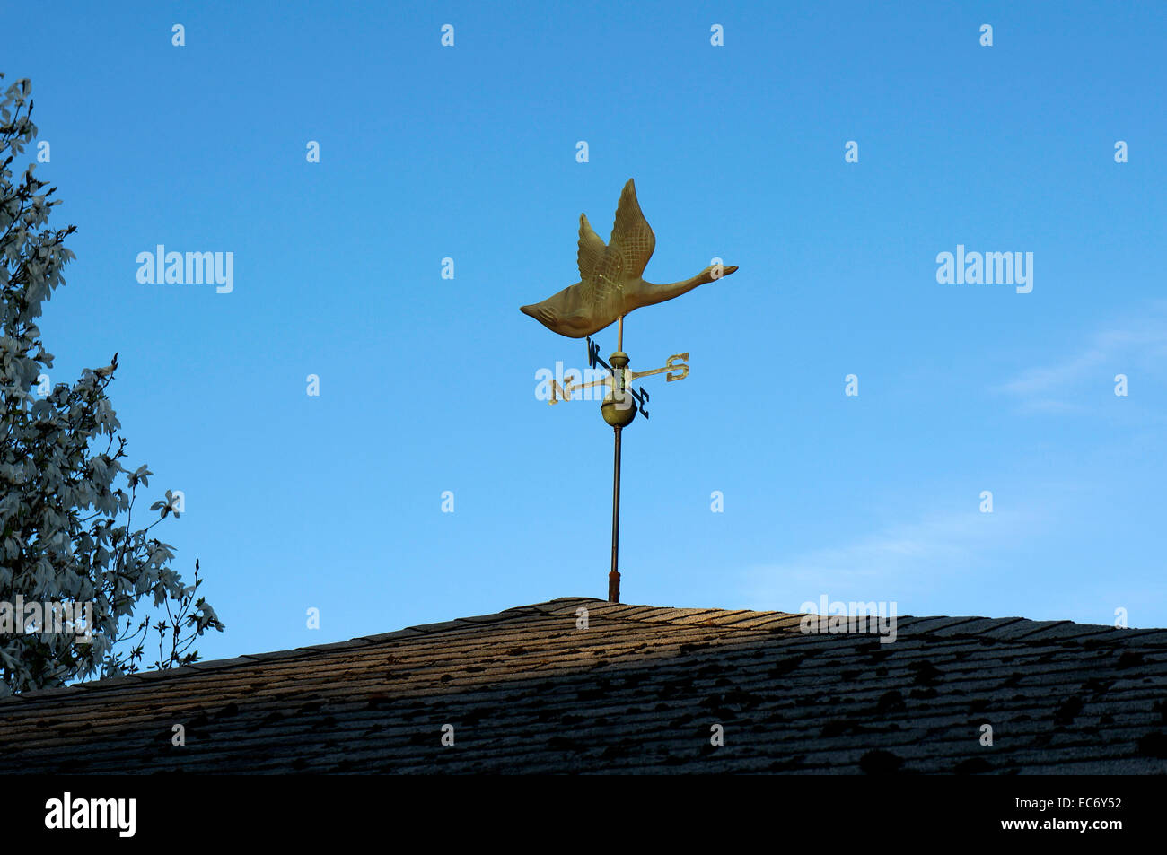 canada-goose-weather-vane-on-a-house-roo