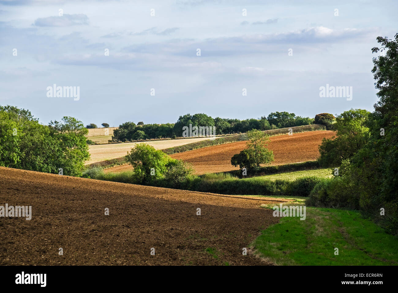 rolling-countryside-and-fields-in-the-cotswolds-upper-rissington-gloucestershire-ECR6RN.jpg