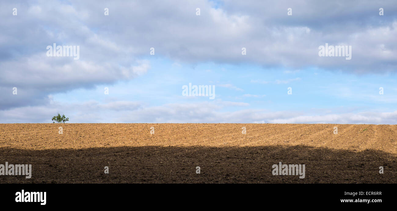 tree-on-horizon-of-ploughed-field-the-cotswolds-upper-rissington-gloucestershire-ECR6RR.jpg