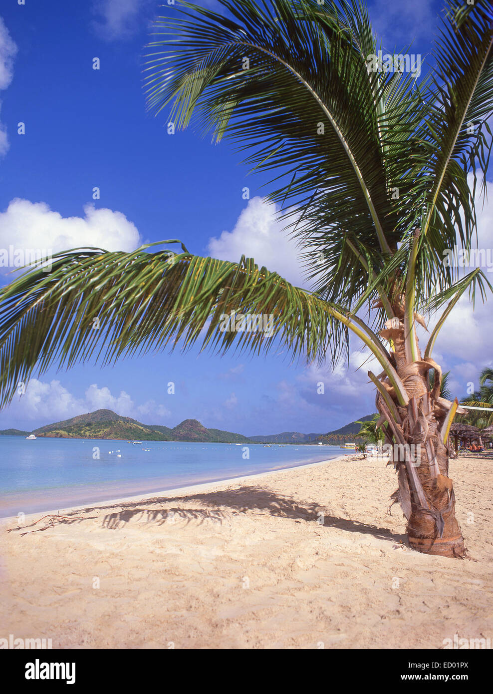 Beach view, Jolly Beach Resort & Spa, Saint Mary's Parish, Antigua, Antigua and Barbuda, Lesser Antilles, Caribbean - Stock Image