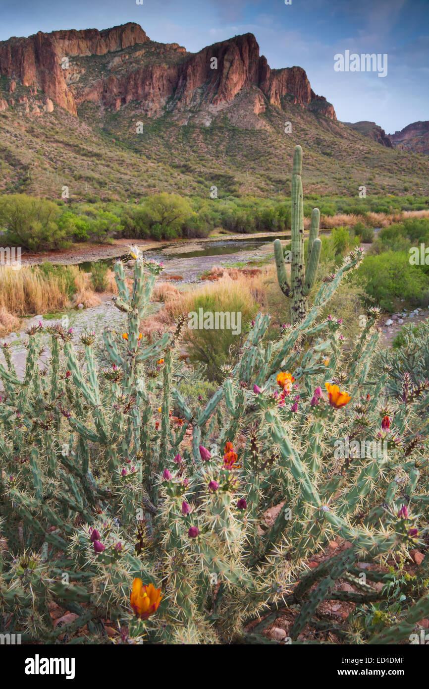 Salt River, Tonto National Forest, East of Phoenix, Arizona. - Stock Image