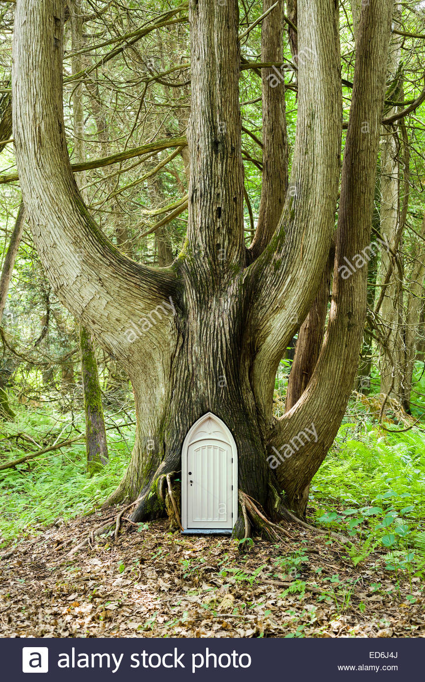 Photo illustration of a small fairy door in a large cedar tree in the enchanted forest. An entrance to the Otherworld.Stock Photo