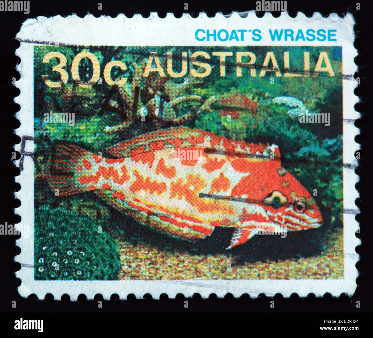 Choat,Australia,orange,fish,orange fish,wildlife,animal,animals,Used and Postmarked,Used,and,postmarked,perforated,Australia,stamp,Used,and,postmarked,Australia,Austrailian,Stamp,post,posting,mail,hobby,perforation,mark,postage,stamp,print,stamp,cancelled,stamp,payment,correspondence,Gotonysmith,post,posting,mail,hobby,perforation,mark,postage,stamp,print,stamp,cancelled,canceled,stamp,payment,correspondence,postman,collection,collector,philately,philatelist,letter,price,history,retro,Australian,Vintage,delivery,date,relationship,communication,Oz,Australia,DownUnder,classic rare unique Austrailian financial,investment,invest,value,British,empire,nation,canceled,printed on black background,close-up,closeup,close,up,sent,send,philately,mailing,shipping,postoffice,office,isolated,circa,special,colour,color,postmarked,marked,airmail,aged,antique,retro,cutting,historic,old,stamps,collection,stamp collection,album,Timbre,Sello,Stempel,Selo,Down Under,Black background