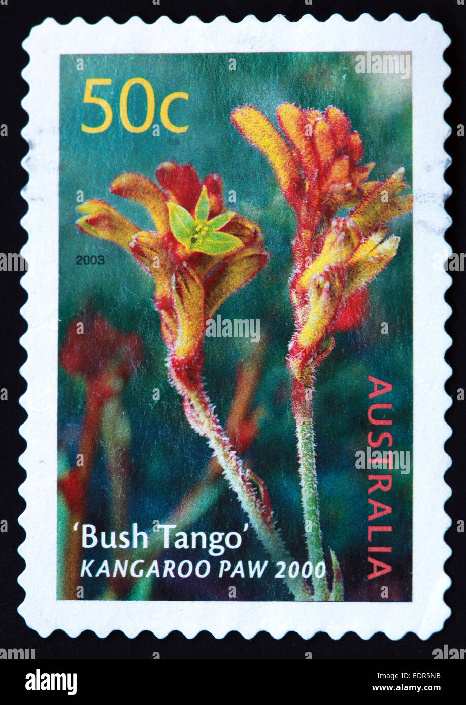 Flower,plant,stamp,Kangaroo Paw,Bush Tango,Used and Postmarked,Used,and,postmarked,perforated,Australia,stamp,Used,and,postmarked,Australia,Austrailian,Stamp,post,posting,mail,hobby,perforation,mark,postage,stamp,print,stamp,cancelled,stamp,payment,correspondence,postman,collectio,Gotonysmith,flowers,hobby,perforation,mark,postage,stamp,print,stamp,cancelled,canceled,stamp,payment,correspondence,postman,collection,collector,philately,philatelist,letter,price,history,retro,Australian,Vintage,delivery,date,relationship,communication,Oz,Australia,DownUnder,classic rare unique Austrailian financial,investment,invest,value,British,empire,nation,canceled,printed on black background,close-up,closeup,close,up,sent,send,philately,mailing,shipping,postoffice,office,isolated,circa,special,colour,color,postmarked,marked,airmail,aged,antique,retro,cutting,historic,old,stamps,collection,stamp collection,album,Timbre,Sello,Stempel,Selo,Down Under,Black background