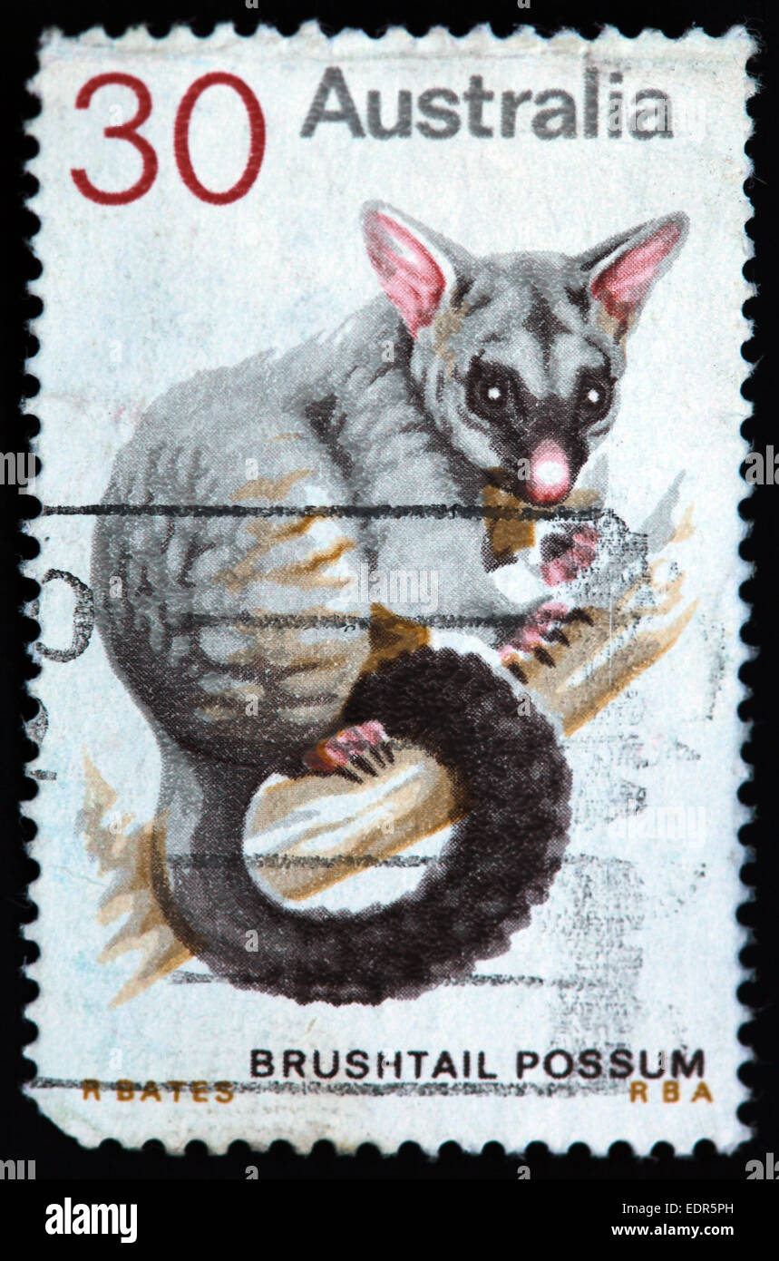 Bushtail Possum,Possom,Used and Postmarked,Used,and,postmarked,perforated,Australia,stamp,Used,and,postmarked,Australia,Austrailian,Stamp,post,posting,mail,hobby,perforation,mark,postage,stamp,print,stamp,cancelled,stamp,payment,correspondence,postman,collection,collector,phila,Gotonysmith,post,posting,mail,hobby,perforation,mark,postage,stamp,print,stamp,cancelled,canceled,stamp,payment,correspondence,postman,collection,collector,philately,philatelist,letter,price,history,retro,Australian,Vintage,delivery,date,relationship,communication,Oz,Australia,DownUnder,classic rare unique Austrailian financial,investment,invest,value,British,empire,nation,canceled,printed on black background,close-up,closeup,close,up,sent,send,philately,mailing,shipping,postoffice,office,isolated,circa,special,colour,color,postmarked,marked,airmail,aged,antique,retro,cutting,historic,old,stamps,collection,stamp collection,album,Timbre,Sello,Stempel,Selo,Down Under,Black background