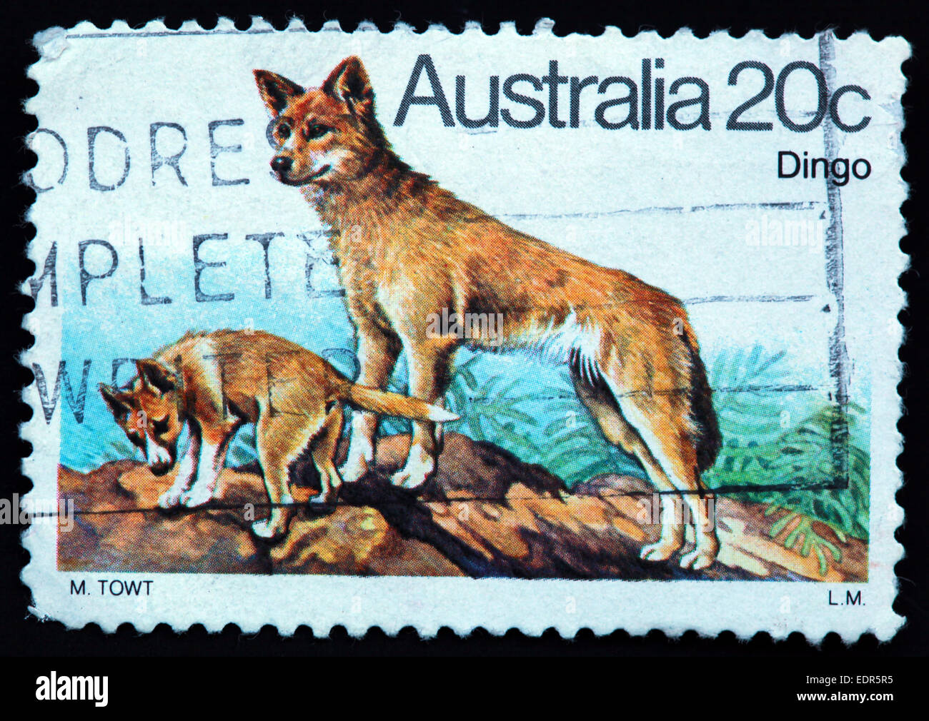 animal,animals,mammal,mammals,dingos,Australia,stamp,Used,and,postmarked,Australia,Austrailian,Stamp,post,posting,mail,hobby,perforation,mark,postage,stamp,print,stamp,cancelled,stamp,payment,correspondence,postman,collection,collector,philately,philatelist,letter,price,hist,Gotonysmith,standing,pair,pair of dingos,range,country,countryside,rock,Two Dingos on a rock,stamp,print,stamp,cancelled,canceled,stamp,payment,correspondence,postman,collection,collector,philately,philatelist,letter,price,history,retro,Australian,Vintage,delivery,date,relationship,communication,Oz,Australia,DownUnder,classic rare unique Austrailian financial,investment,invest,value,British,empire,nation,canceled,printed on black background,close-up,closeup,close,up,sent,send,philately,mailing,shipping,postoffice,office,isolated,circa,special,colour,color,postmarked,marked,airmail,aged,antique,retro,cutting,historic,old,stamps,collection,stamp collection,album,Timbre,Sello,Stempel,Selo,Down Under,Black background,Buy Pictures of,Buy Images Of