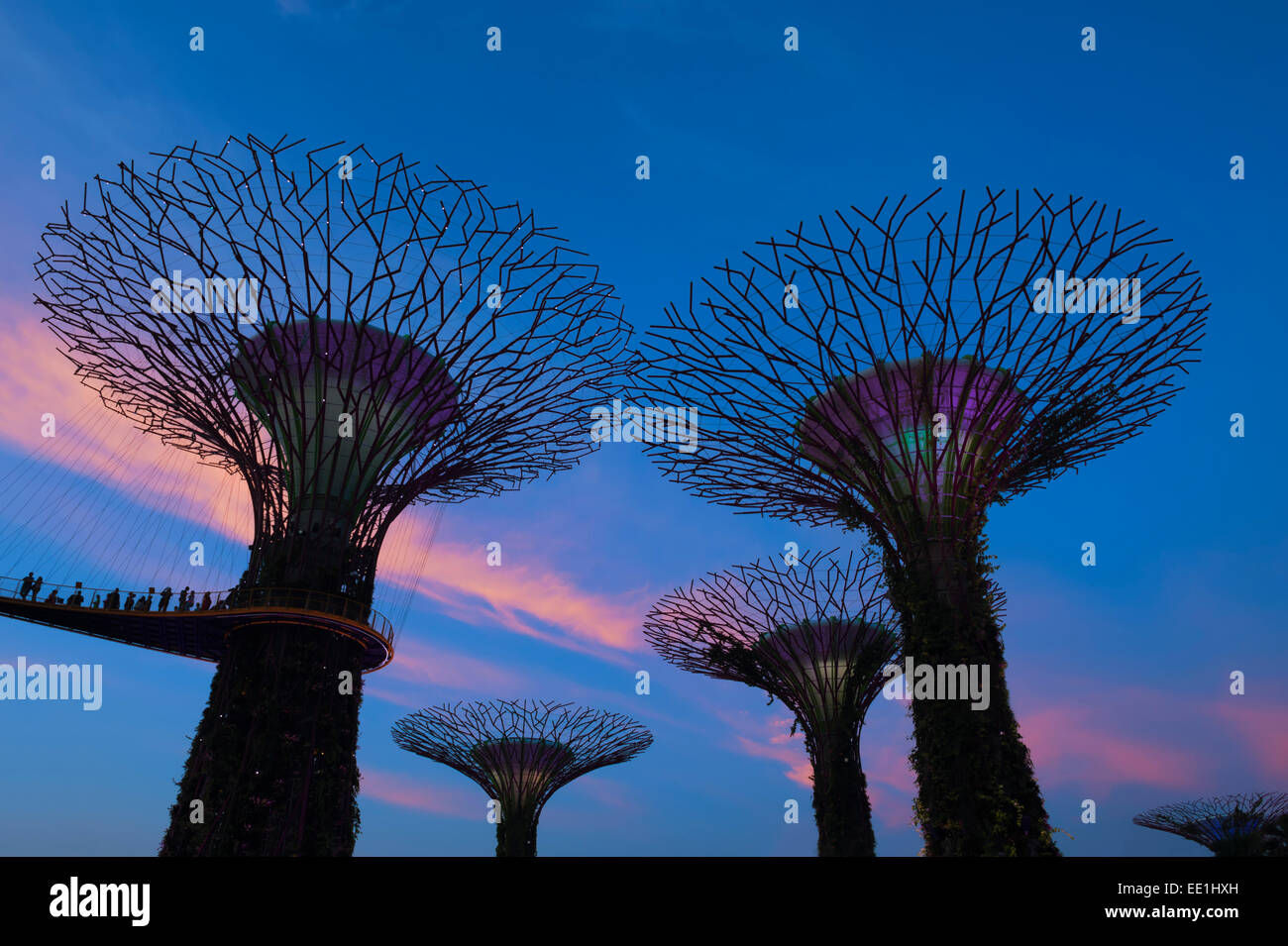 Gardens by the Bay at night, Singapore, Southeast Asia, Asia - Stock Image