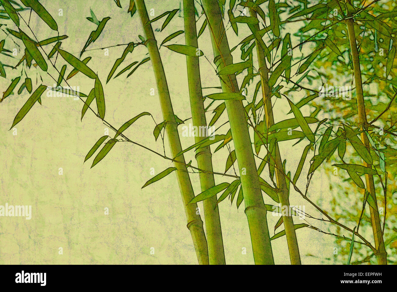 grunge-vintage-zen-bamboo-green-natural-textured-background-mixed-EEPFWH.jpg