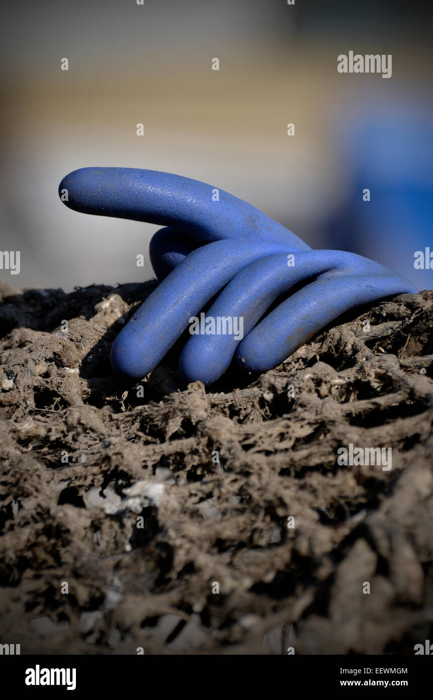 blue rubber glove - Stock Image