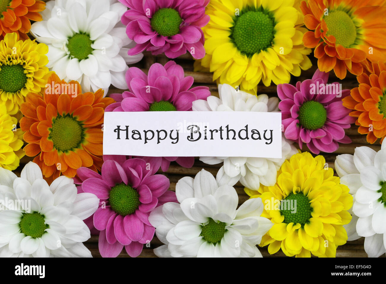 Happy birthday card with colorful santini flowers stock photo happy birthday card with colorful santini flowers izmirmasajfo Image collections