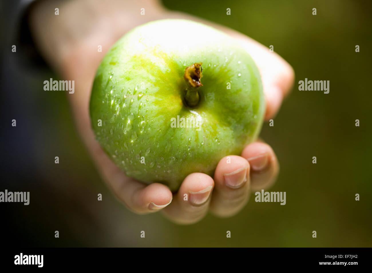 Hand holding fresh green apple - Stock Image