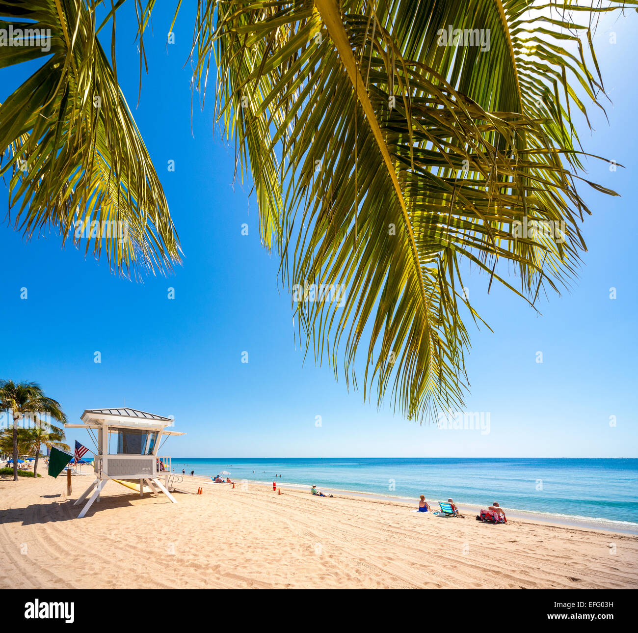 https://c7.alamy.com/comp/EFG03H/palm-trees-on-quiet-beach-at-ft-lauderdale-fort-lauderdale-beach-florida-EFG03H.jpg