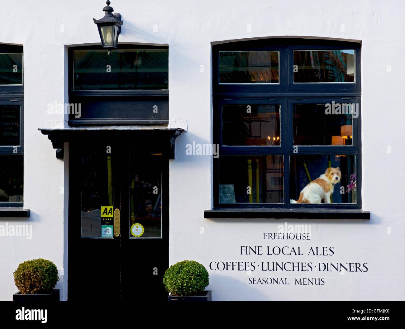 terrier-on-display-in-the-window-of-the-old-drum-pub-in-petersfield-EFMJK0.jpg
