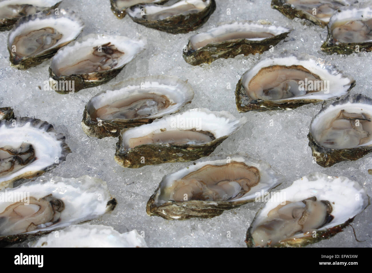 Oysters on ice at the Wellfleet Oyster Festival, Cape Cod, Massachusetts. Stock Photo