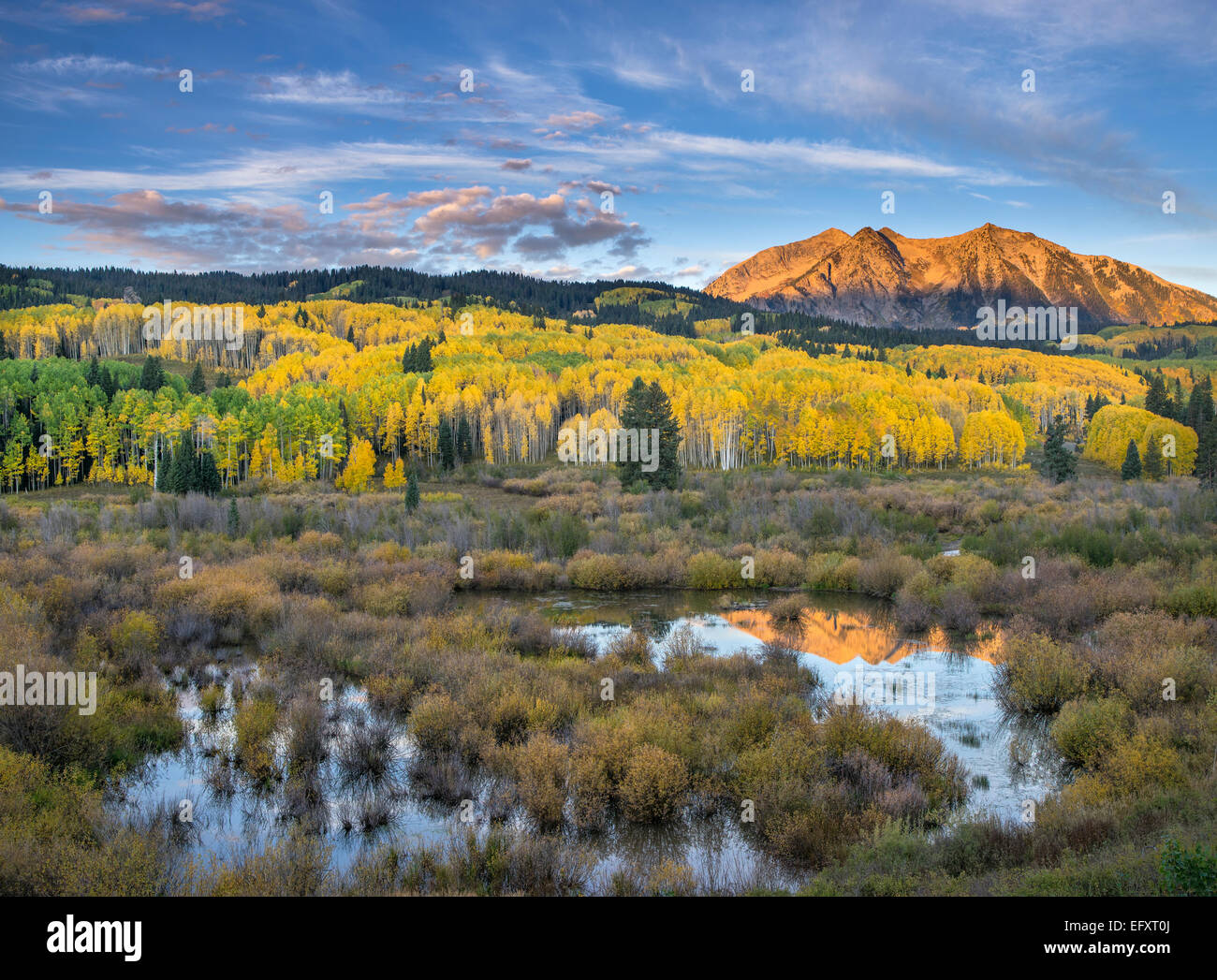 Gunnison National Forest, West Elk Mountains, CO: Sunrise light on East Beckwith Mountain, from a beaver pond near - Stock Image