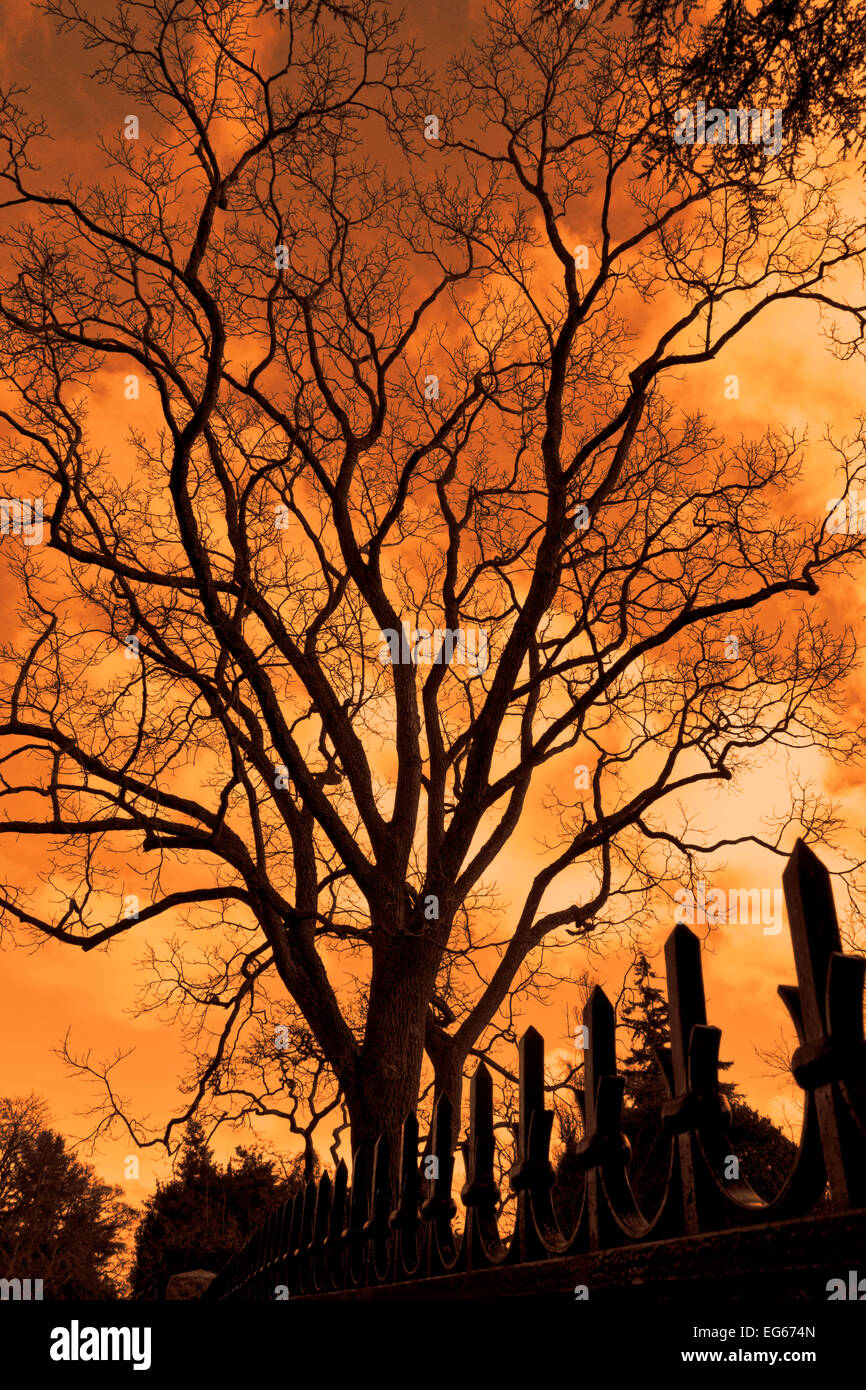 Silhouette of a tall branching tree and pointed metal fence against a menacing orange sky. Stock Photo