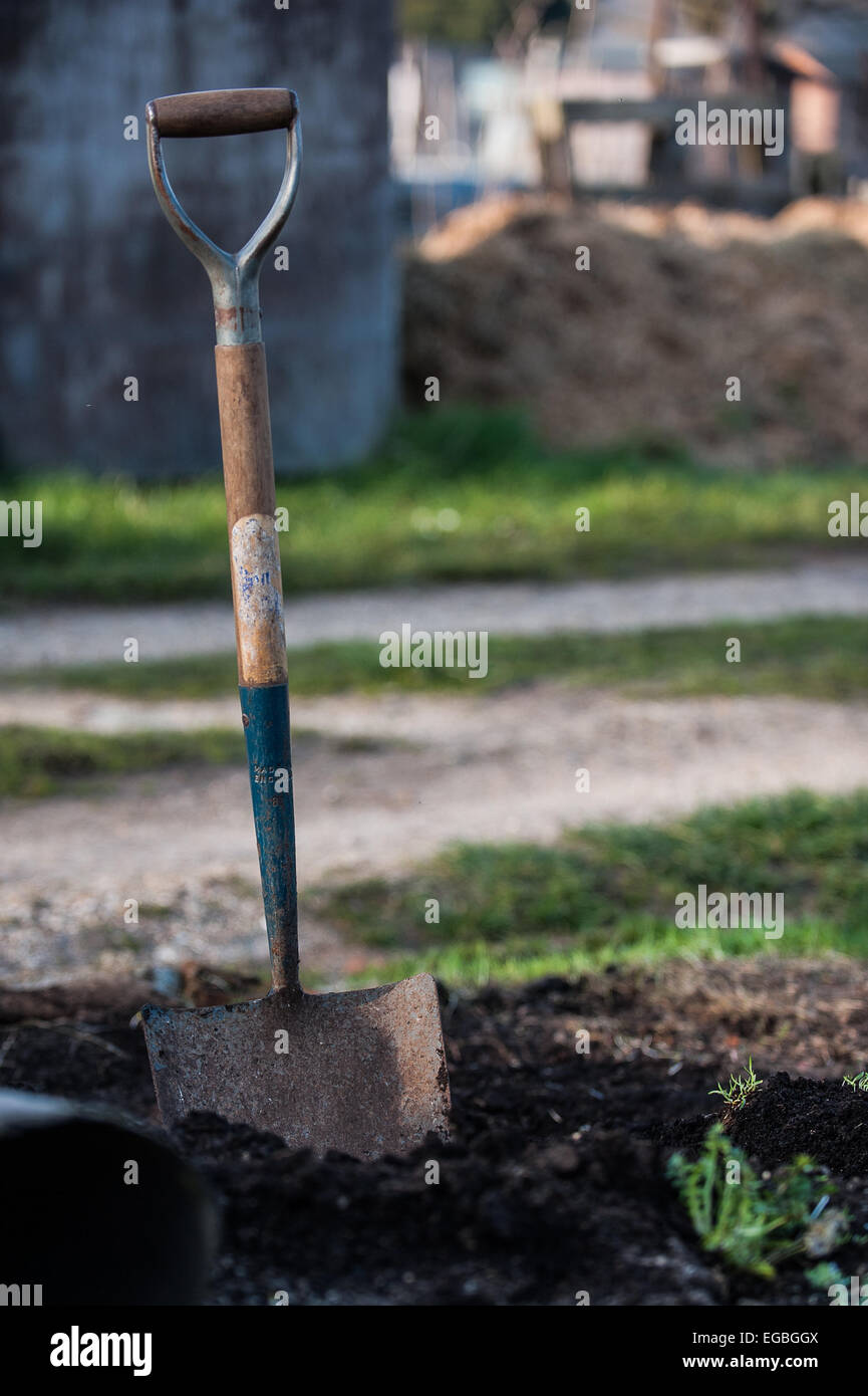 Spade stuck in the ground Stock Photo