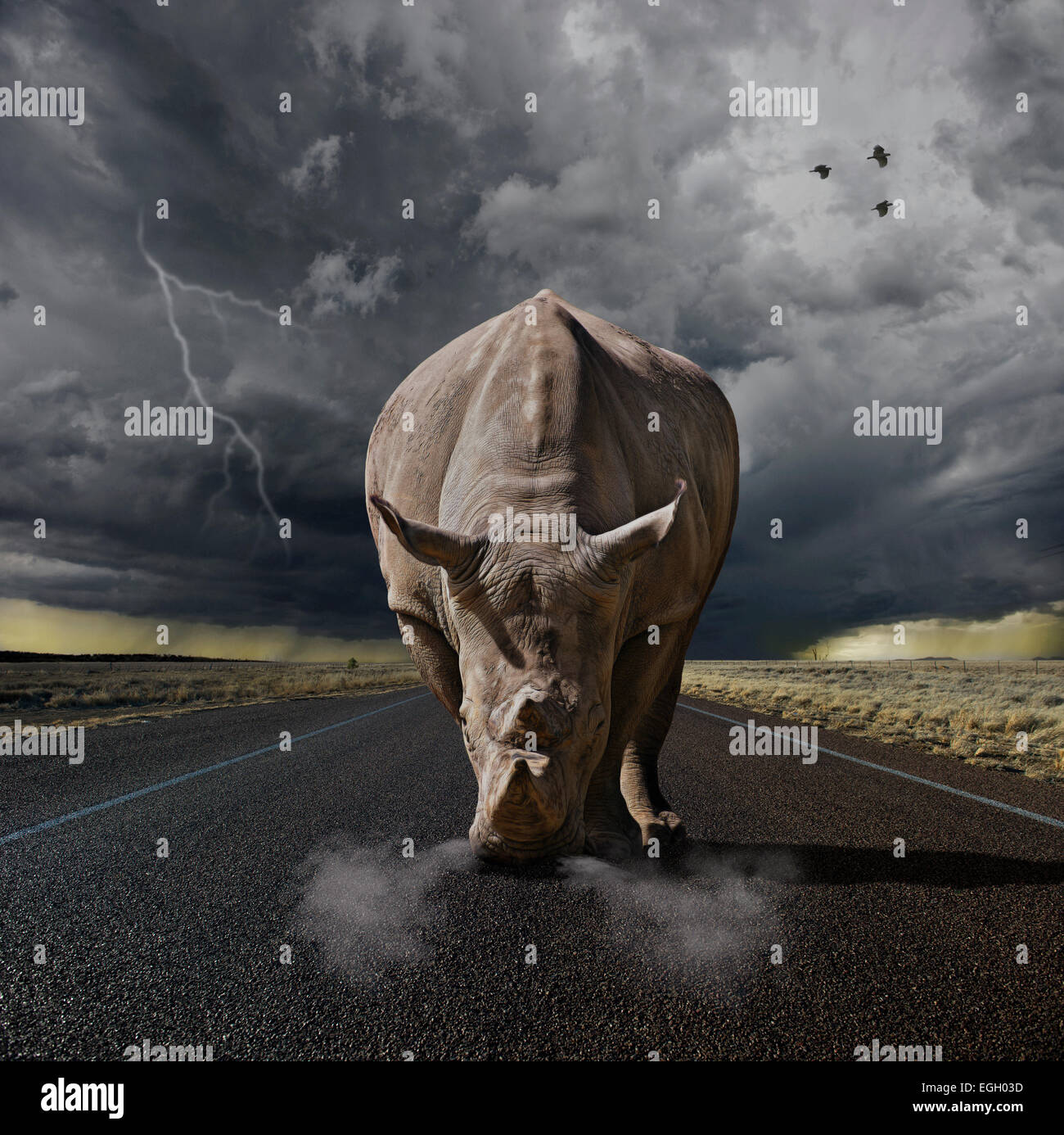 Large rhino ready to charge - Stock Image