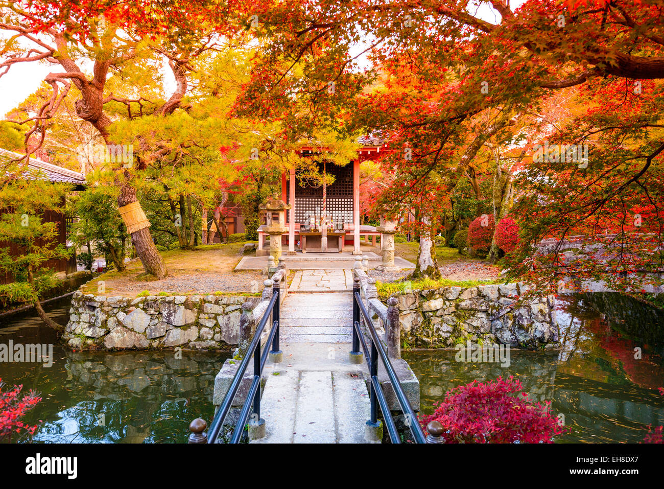 Fall foliage in Kyoto, Japan. - Stock Image