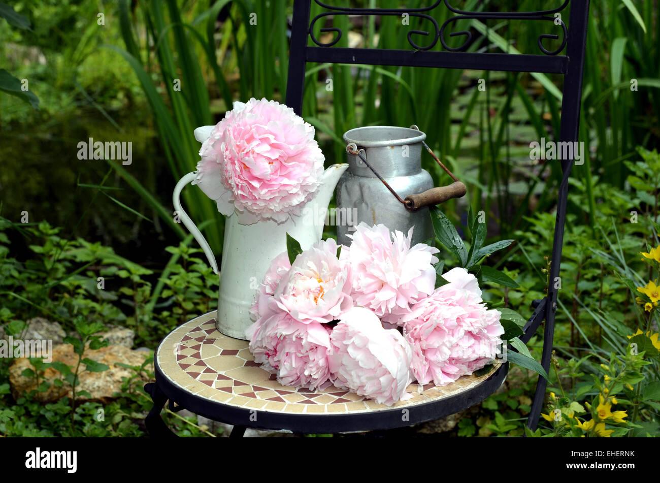 Shabby Style Garten garden peonies shabby chic flowers stock photo 79616591 alamy