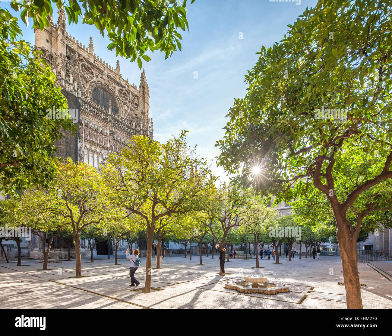 https://c7.alamy.com/comp/EHM270/seville-cathedral-patio-courtyard-with-orange-trees-with-oranges-and-EHM270.jpg