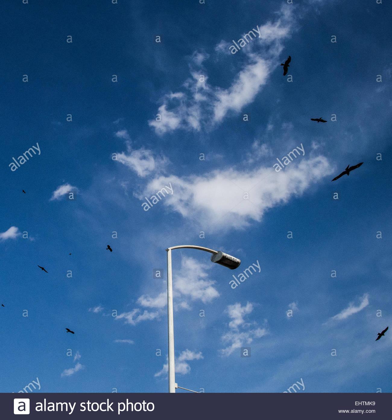 Japanese hawks circle in the sky above a streetlight at Enoshima. Stock Photo