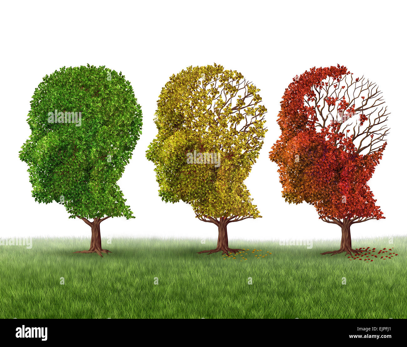 Memory loss and brain aging due to dementia and alzheimer\'s disease ...