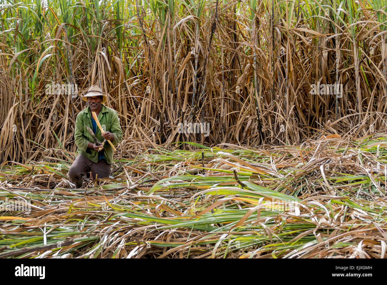 Cuba Farmer Cutting Sugar Cane