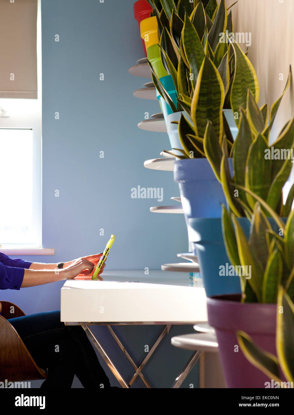 Cropped shot of woman using digital tablet in front of diagonal row of potted plants - Stock Image