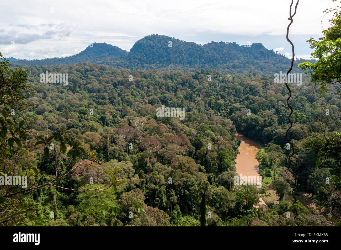 view-of-the-borneo-rainforest-sabah-malaysia-EKMK85.jpg