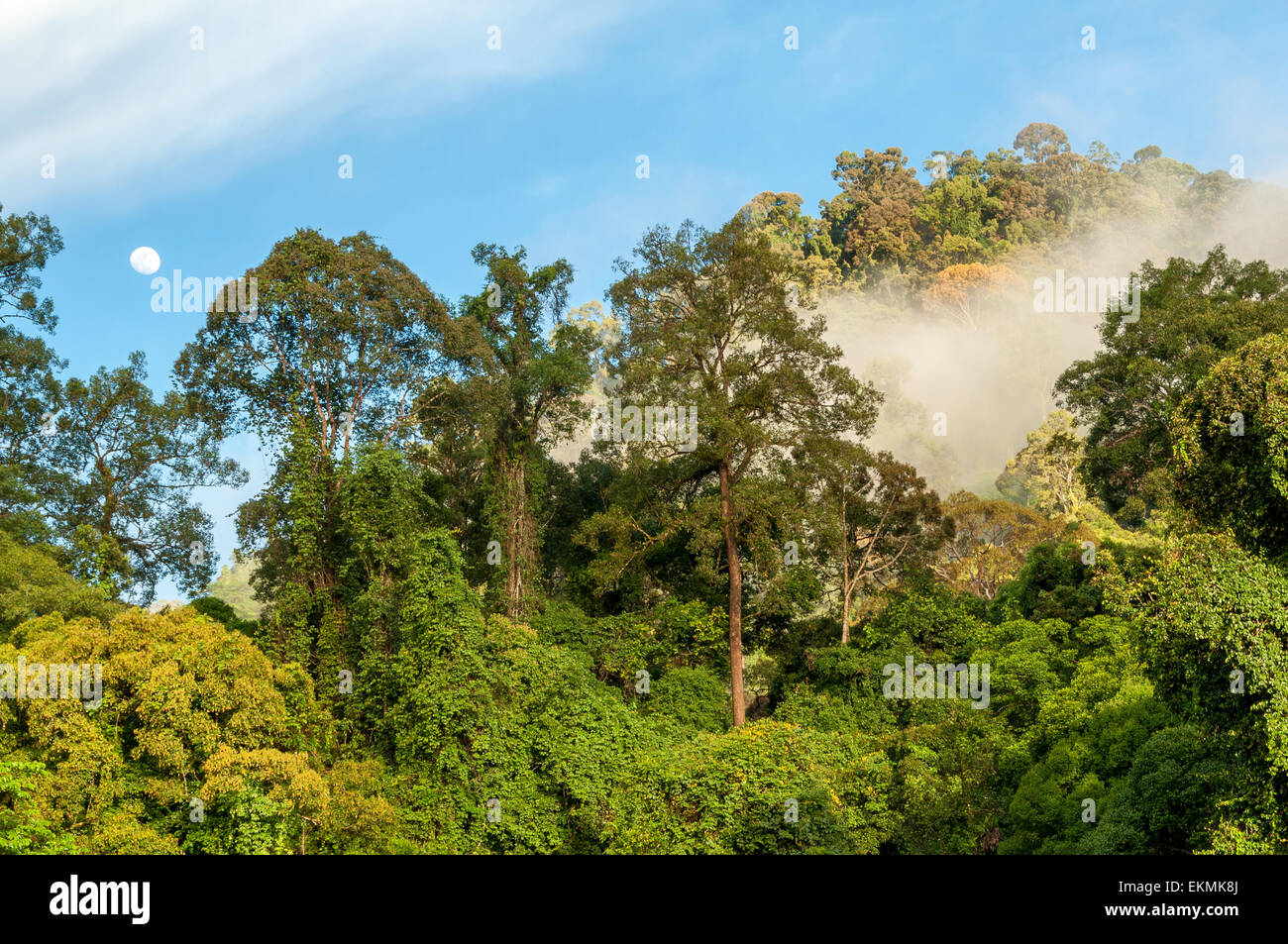 view-of-the-borneo-rainforest-trees-malaysia-EKMK8J.jpg