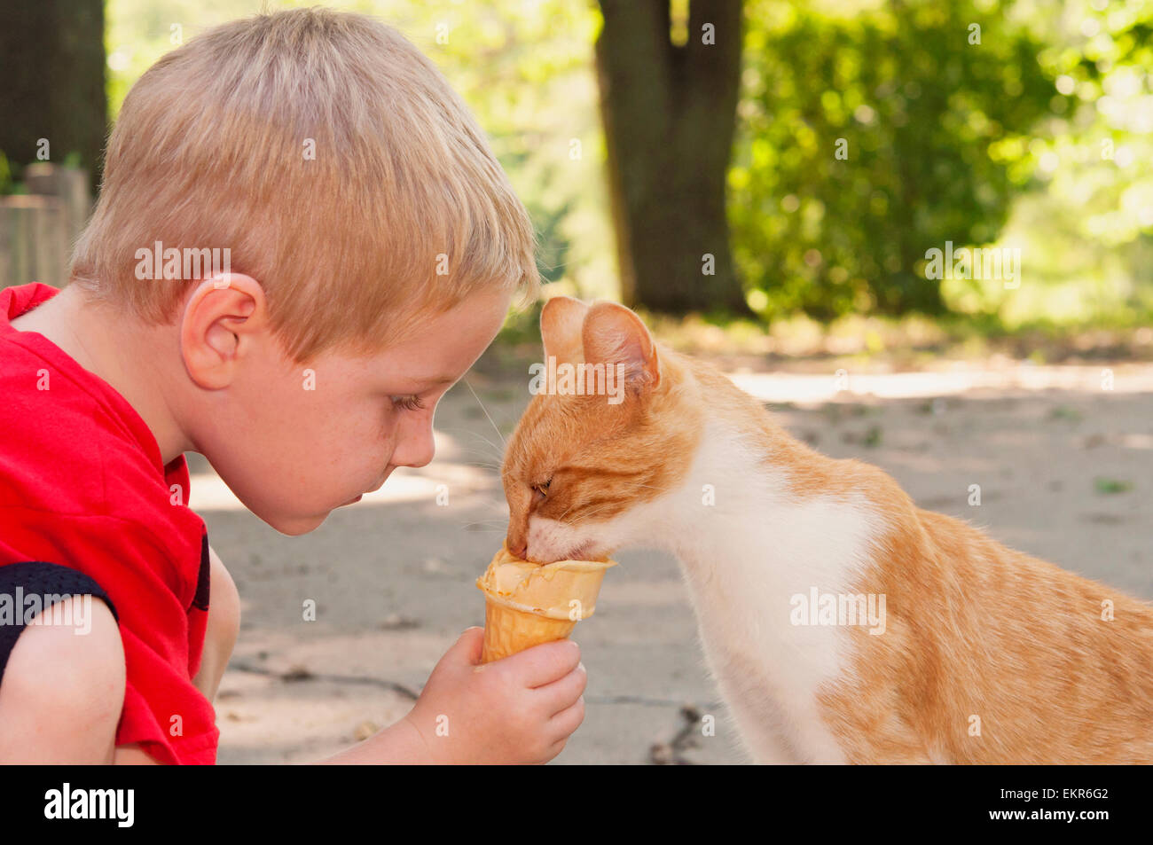 Child feeding cat his ice-cream cone - Stock Image