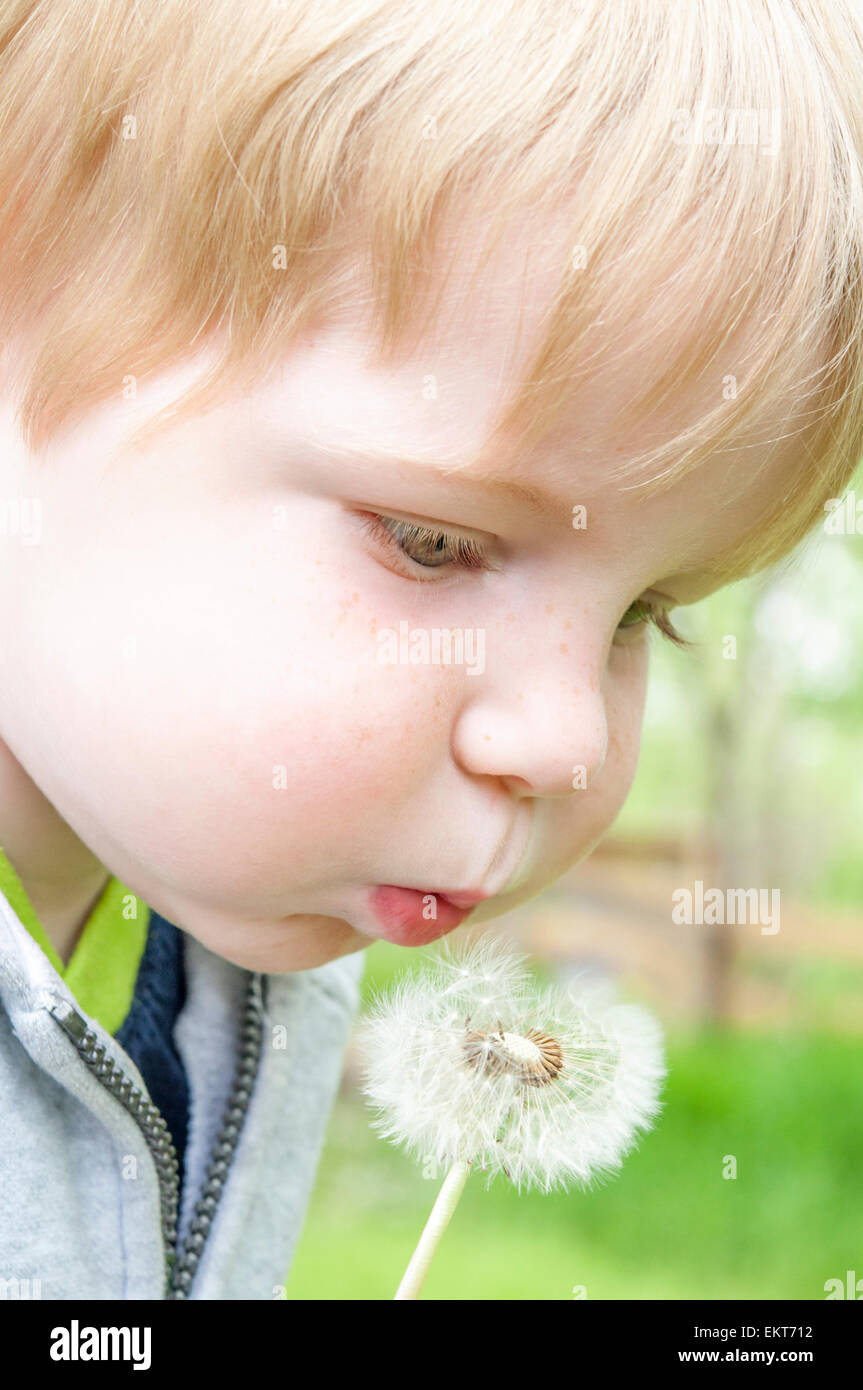 child blowing on dandelion - Stock Image