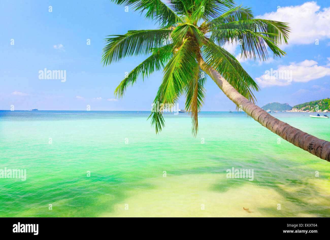 sea with coconut palm - Stock Image