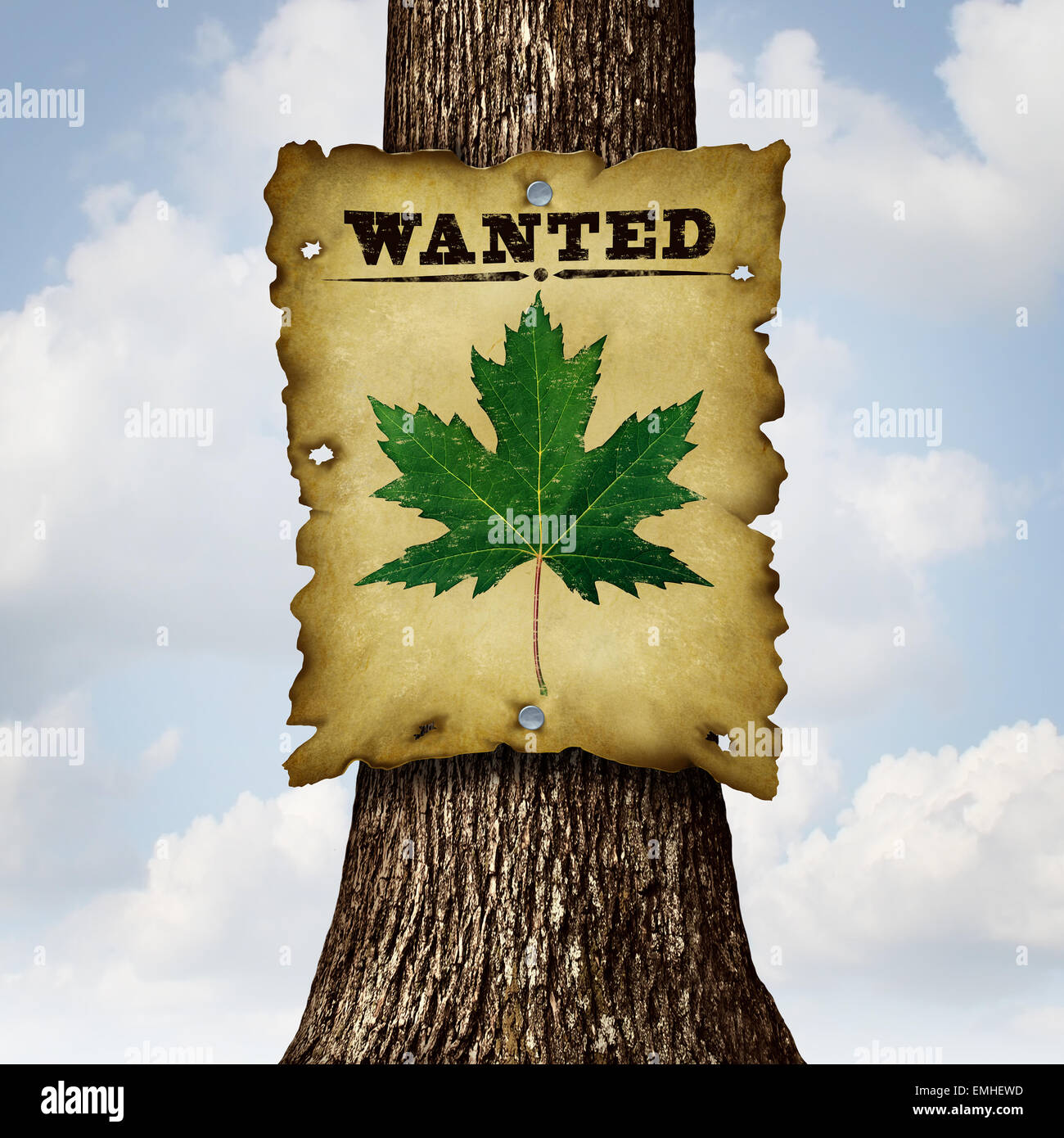 Environmentally Friendly green concept as a tree trunk and a wanted sign with a leaf as an ecology and conservation - Stock Image