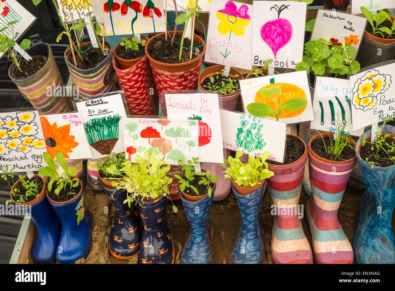 Young container plants grown by children in colourful wellington boots, with descriptive labels attached. Stock Photo