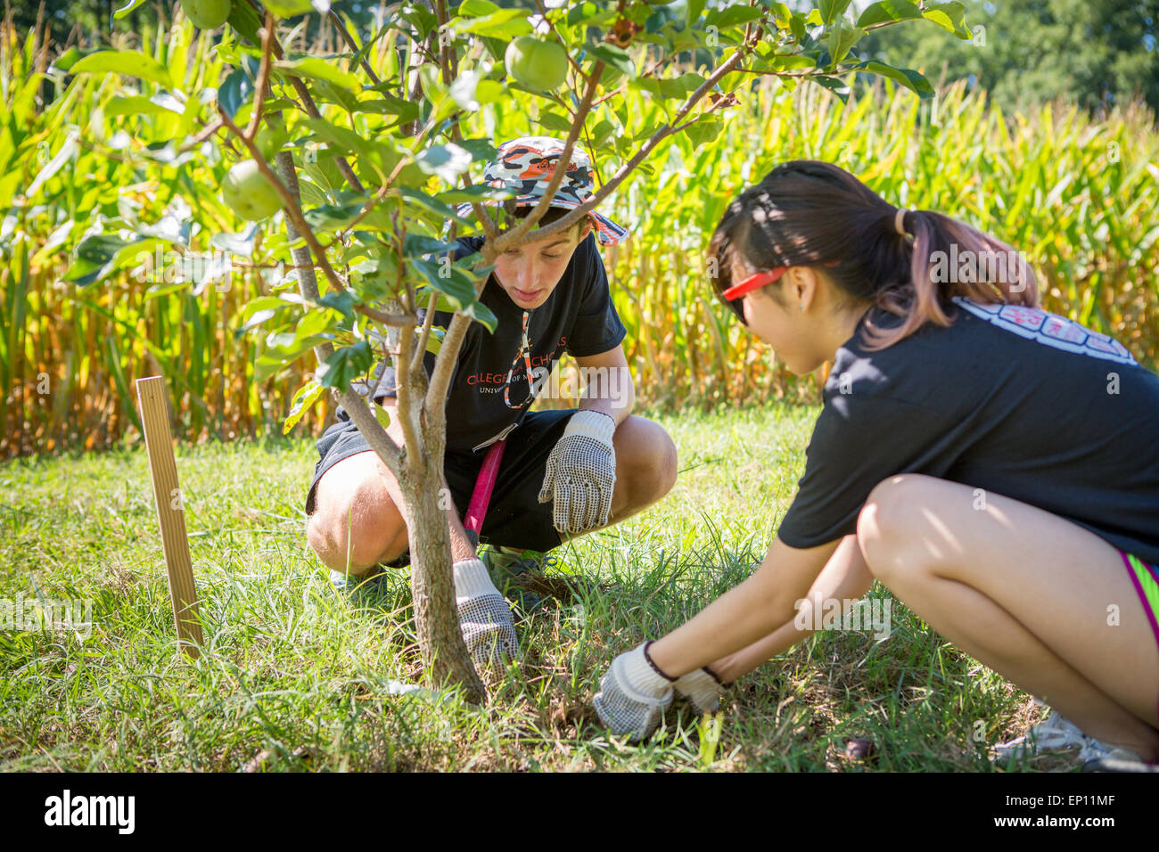 Two young adults planting a tree. - Stock Image