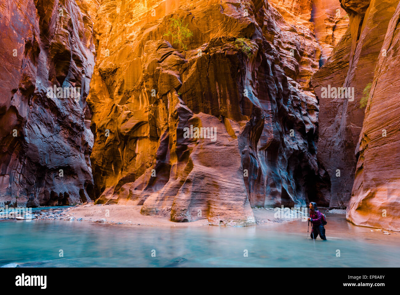 Zion Narrows water hike along Virgin River - Stock Image