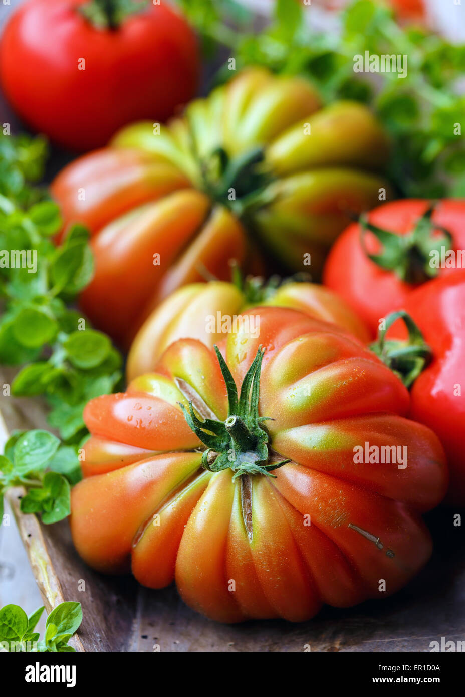 Tomatoes variety 'Cuore di Bue' - Stock Image
