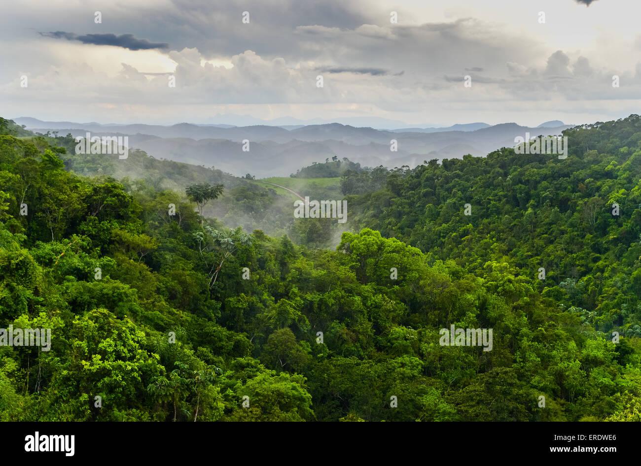 Atlantic Forest, Serra do Funil, Rio Preto, Minas Gerais, Brazil Stock Photo