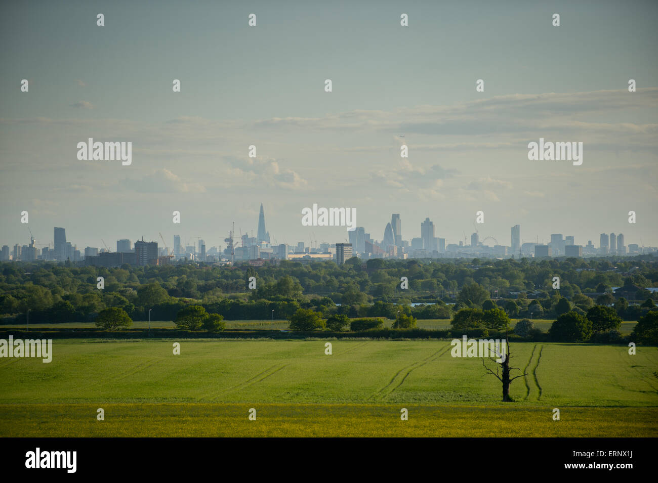 The London skyline from Hainault, Essex showing the Shard, Tower 42, 30 St Mary Axe (the gherkin), 20 Fenchurch - Stock Image